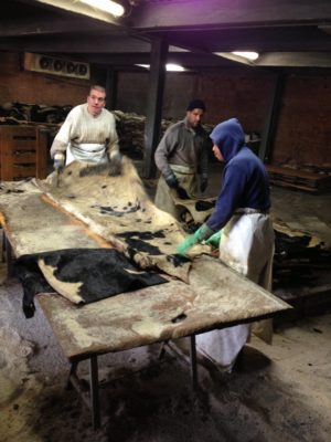 塩漬けされた原皮をきれいにカットしていく工程。
